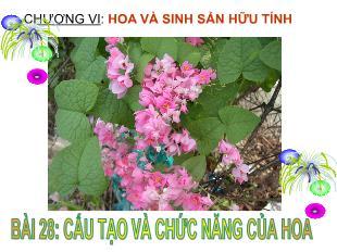 Bài giảng Sinh học Lớp 6 - Bài 28: Cấu tạo và chức năng của hoa